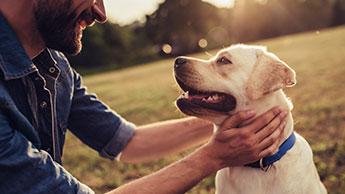 여러분의 개는 음식, 쓰다듬기, 칭찬 중 어느 것을 더 선호할까요?