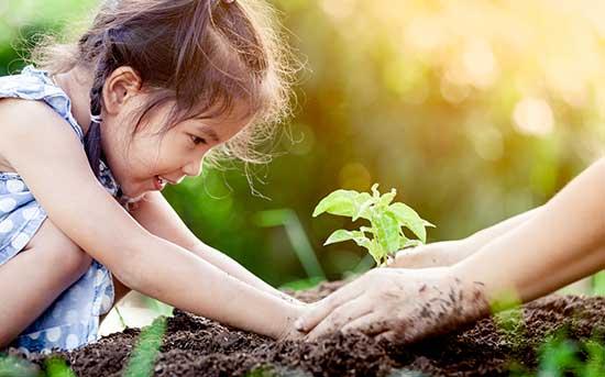 나무 심기