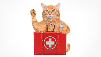 Avez- vous une trousse de secours pour animal de compagnie ?