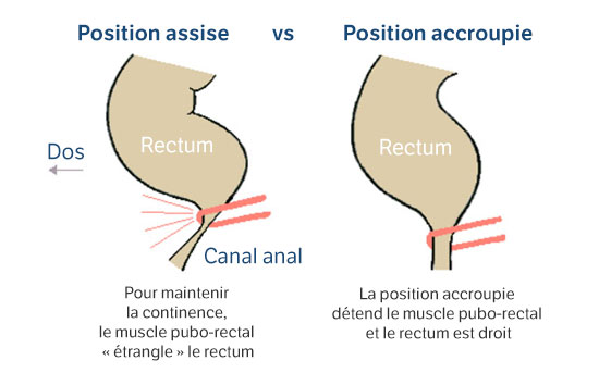 Position assise vs Position accroupie
