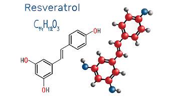 レスベラトロールは悪質細胞を自己破壊させる
