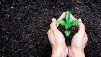 des mains qui font une plantation