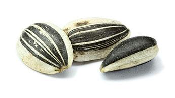 sementes de girassol