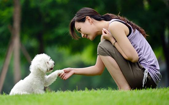 mulher trainando o cachorro no comprimento de mão