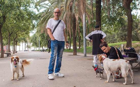 cachorros na caminhada