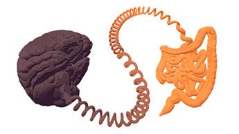 intestino e cérebro