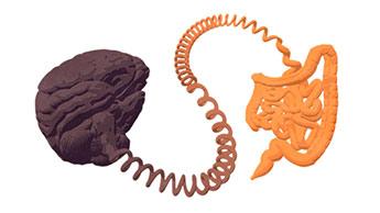 自閉症における腸脳連関が研究から明らかに