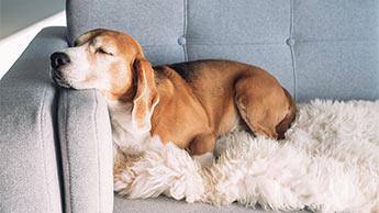 개의 수면 자세 6가지와 각 자세가 개의 기분에 관해 알려주는 사실