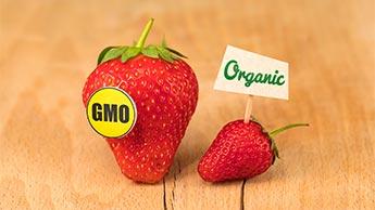 유기농과 유전자조작식품