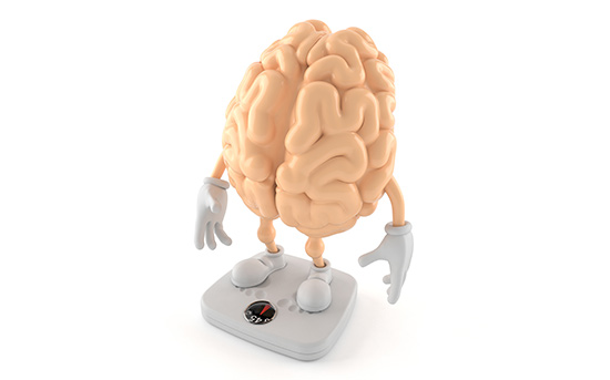 비만과 뇌