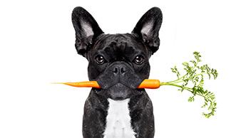 당근을 물고 있는 강아지