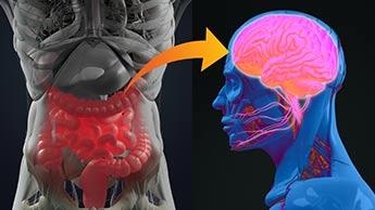 Por que o propionato de cálcio está fortemente ligado ao diabetes e ao autismo?