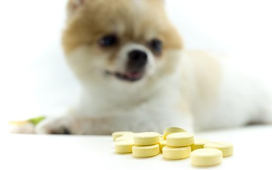 강아지 알약