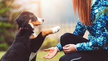 Cão em treinamento