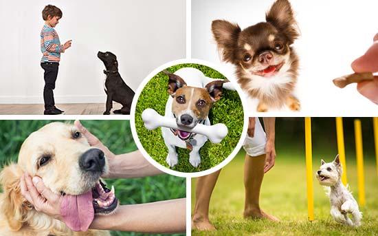Adestramento Canino de Reforço Positivo