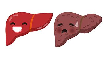 Fígados doentes e saudáveis