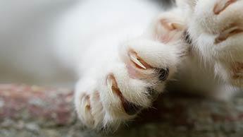 Eine der schlechtesten Tierarztentscheidungen, die Sie für Ihre Katze treffen können