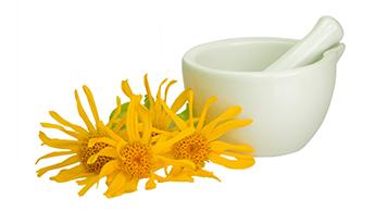 Arnica: Essa planta poderosa promove vários tipos de efeitos curativos