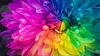 다양한 색의 꽃