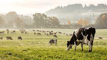 Setzen Sie auf Tiere, die mit Weidefütterung und biologisch aufgezogen wurden – AGA zertifiziert