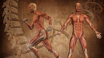 Körperbewegung
