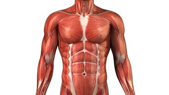 Invecchiamento muscolare
