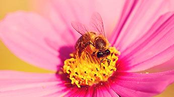 20 de maio é o dia mundial das abelhas