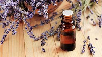 Lavendel: Die Blume mit vielen Gesichtern