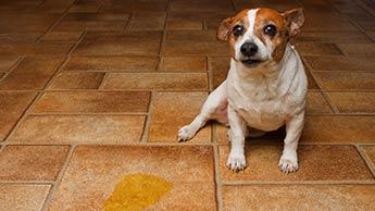 강아지 분리불안에 관해 견주가 저지르는 실수