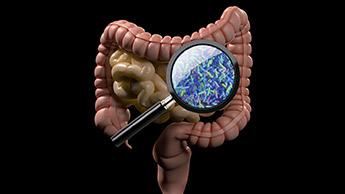 Кишечные бактерии - ключ к здоровью
