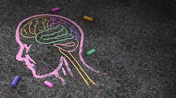 자폐증, 내장, 뇌