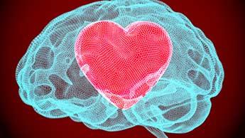 脳内の心臓