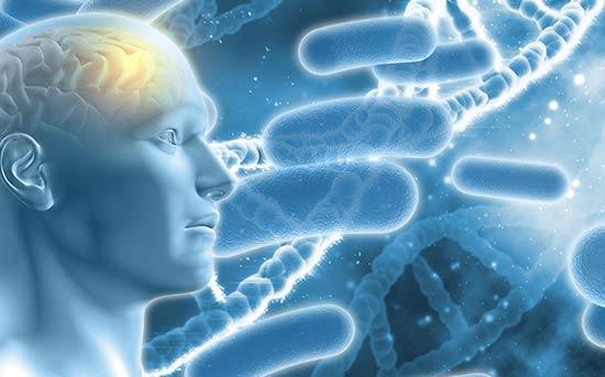 유전과 뇌