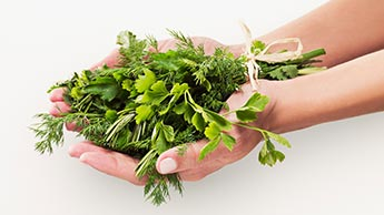 Potencjalne właściwości prozdrowotne kolendry i nasion kolendry