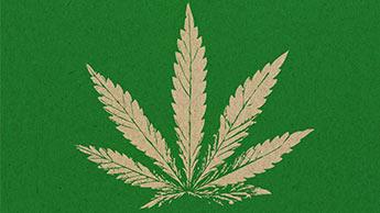 растение конопля