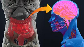 プロピオン酸カルシウムが糖尿病や自閉症につながる理由