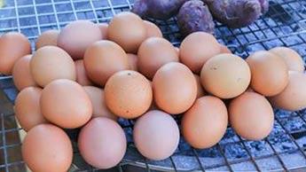 холин из яиц