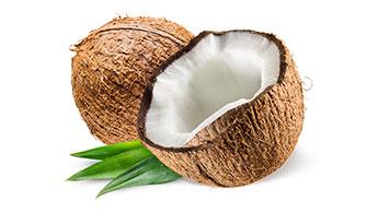 코코넛의 건강 효능