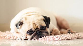 우울해 보이는 개