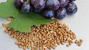 Winogrona i pestki winogron
