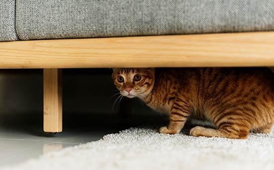 숨어 있는 고양이