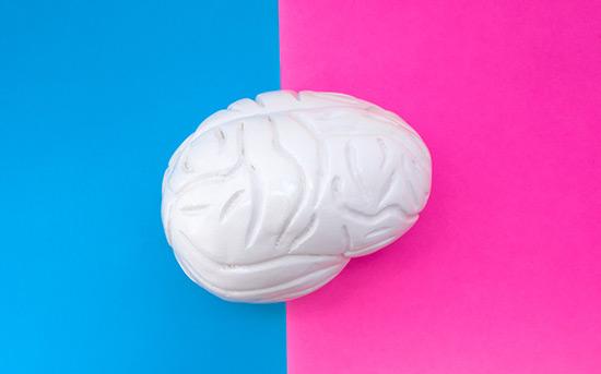 남성과 여성의 뇌 차이