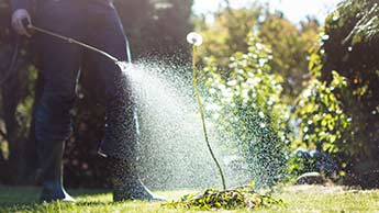 In che modo gli OGM e il glifosato influiscono sulla biologia del suolo