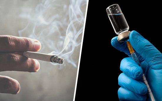 담배회사 백신 개발
