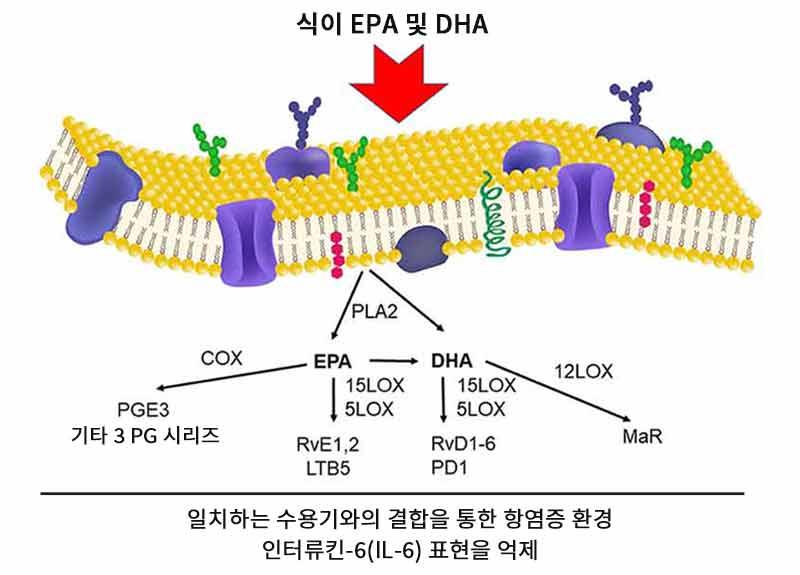 식이 EPA 및 DHA