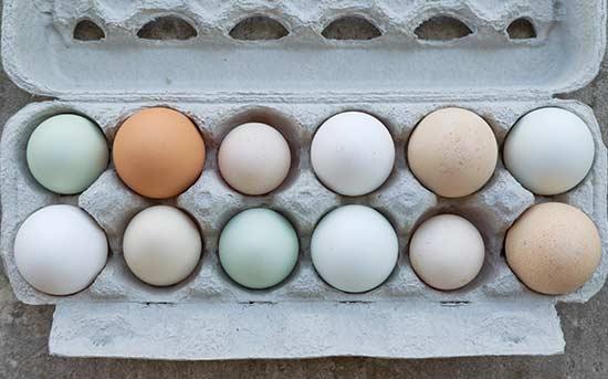 다양한 색의 달걀