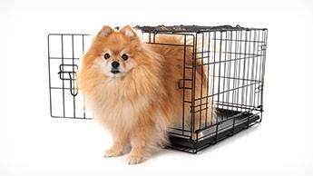 """""""이것""""이 없으면 개가 편안하게 지내지 못할 수 있습니다"""
