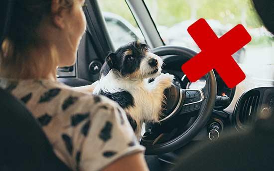 운전석에 앉은 개