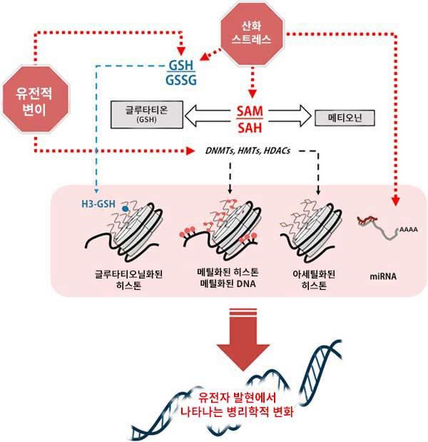 글루타티온은 유전자 발현의 병리학 적 변화에 영향을 미칩니다