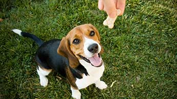 comment garder votre chien en bonne santé